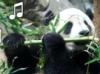 kumir_k9: (Panda Flute)