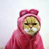 pretentious_kneecap: (kitty; say what)