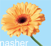 nshgrl: (nasher work flower) (Default)
