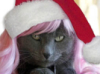 nshgrl: (santa cat 1)