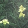 lastflowerstanding: (Default)