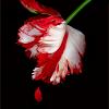 chalcedony: (tulip)