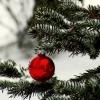 chalcedony: (Christmas)