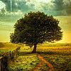 iamagoatgirl: (tree)