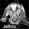 squidgiepdx: (personal - Citrus Hill Jethro)