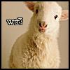 wolffe: (sheep wtf)
