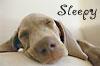 wolffe: (sleepy)