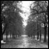 lauralh: (rain)