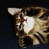 erindubitably: (ded of cute)