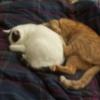 zhie: (kittyluv)