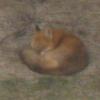 zhie: (fox)