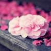 violaine: (Floral: Pink)