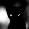 violaine: (Cats: Poe-like cat)