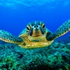 violaine: (Animals: Sea turtle!)