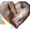 mcroft: (ferret, love)