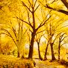 bellatriamusica: (Autumn by justlook3)