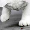 jesslla: (Kittybug)