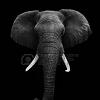 delphipsmith: (elephant)