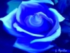 sarahjean: (blue rose)