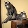 khedron: (Cats)