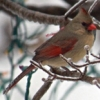 khedron: (cardinal)