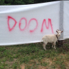 "cyprinella: goat standing in front of a banner reading ""DOOM"" (goat doom)"