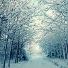 csi_sanders1129: (winter)