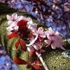 fyre13: (Spring)