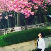 aikokanzaki: (Sakura)