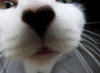 karen9: (Cat nose) (Default)