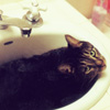 garote: (cat sink)