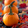 gina_wbg: (Pumpkins)