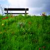 scordatura: (scene: bench in field)