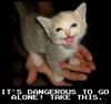 laurion: (dangerous to go alone kitten)