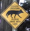 holyhippie: (Coyote Crossing)