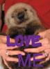 hawkdancer: (love otter)