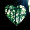 ivy: (forest heart close)