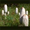 infryq: (Mushroom family)