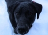 sal_amanda: (snow dog)