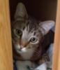 jilfina: (linen closet, Rudy, towels)