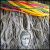 brokenworld01: (Buddha in the tree)