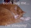 amethyst73: (sleepy tazz)