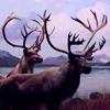 oceantheorem: (caribou)