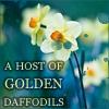 oceantheorem: (daffodils)