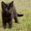 runs: (cat: in the field)