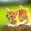 nerys29: (meow)