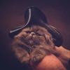 kittytoes: (Vincent Victor von Fluffnstuff)