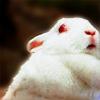 ben_linus: (rabbit)