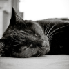 bellflower: A black cat laying on the floor sleeping ([Cats] Nap time)