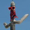 platypus: (mr. cactus)